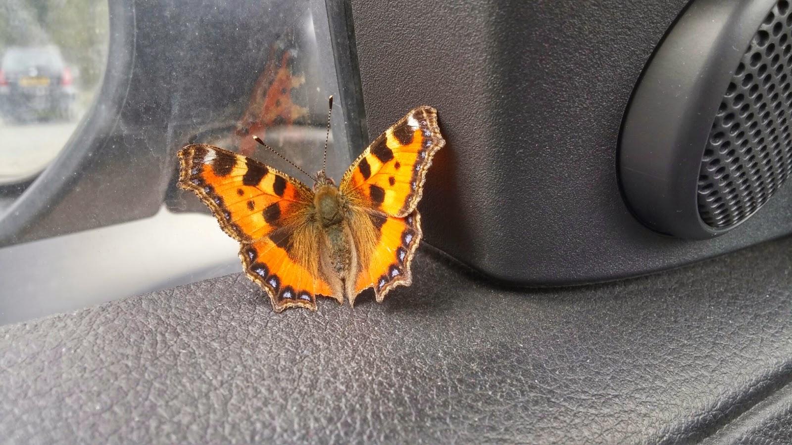 butterfly in car