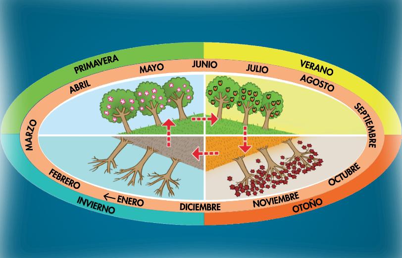 http://www.primerodecarlos.com/SEGUNDO_PRIMARIA/tengo_todo_4/root_globalizado5/ISBN_9788467808810/activity/U03_115_01/visor.swf