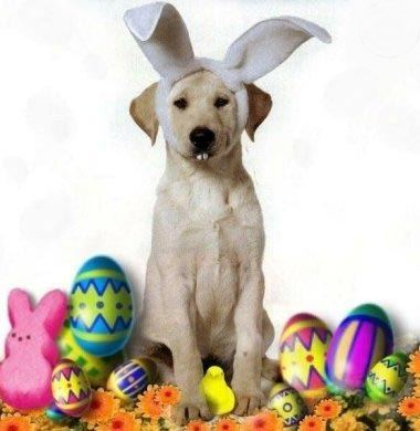 Funny Happy Easter Dog