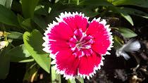 Tengo otras flores