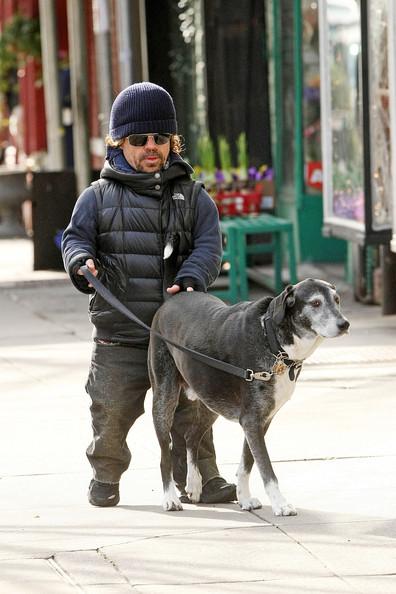 Doglovers Dog Walking Service Senga Bellshill
