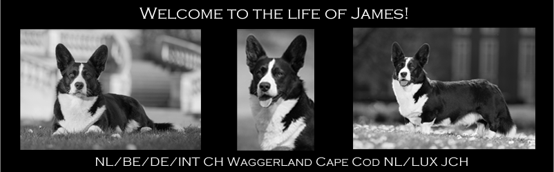 CH Waggerland Cape Cod aka James