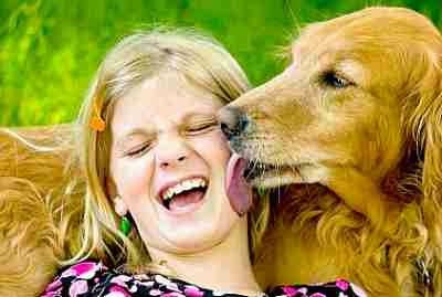 cachorro-lambendo