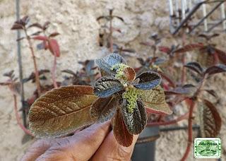Planta de forração para jardim