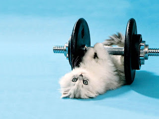 Animals Working Out