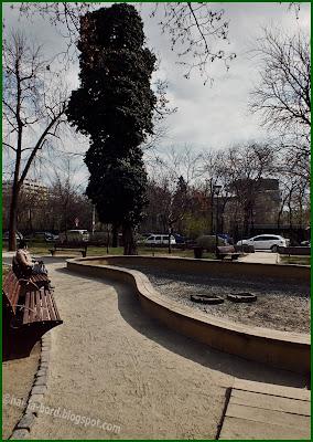 copac stufos gradina icoanei bucuresti