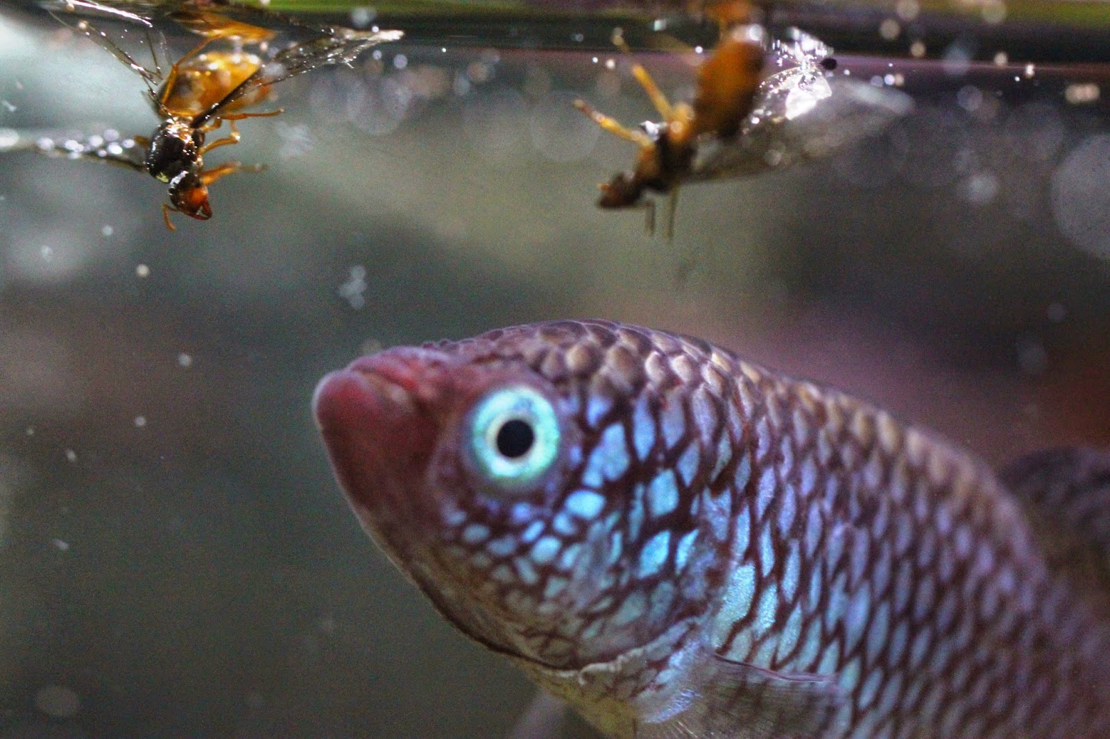 Choose the right aquarium fish food live infusoria for Live fish food