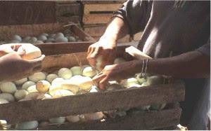Pengawet Telur Itik