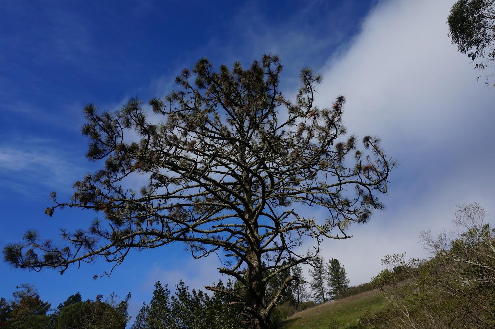 Tilden Regional Park Hike - greysuede.com