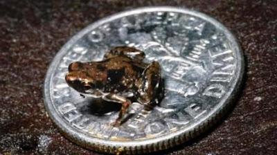 Las cosas más pequeñas del Mundo.