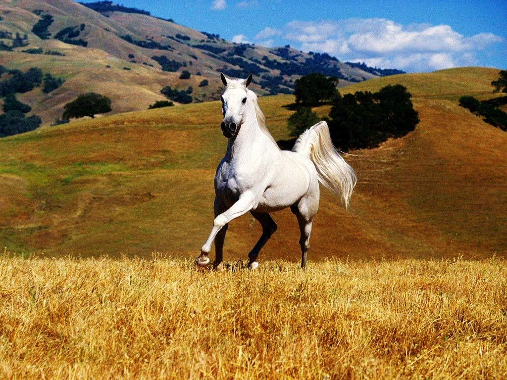 Wonderful   Wallpaper Horse Stunning - 3  Perfect Image Reference_813319.jpg