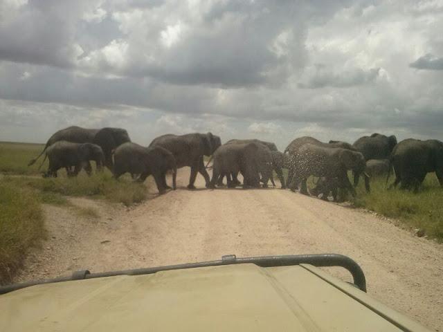 Serengeti National Park Tanzania