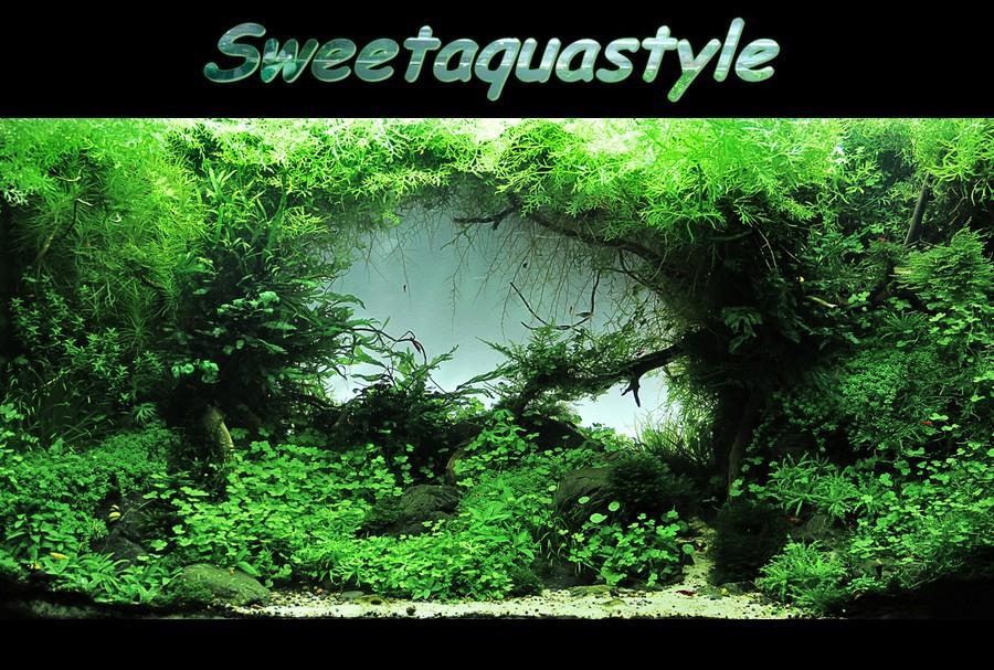 Sweetaquastyle