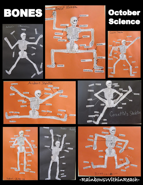 photo of: Study of Bones in Skeleton in Elementary School (via RainbowsWithinReach)