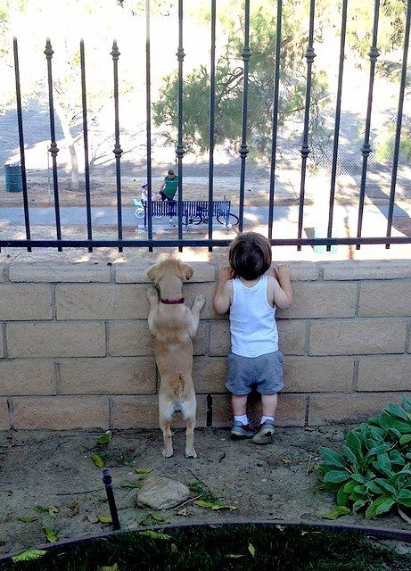 Amazing friendship of a kid and a puppy, both they are curious of freedom. Desire for freedom prison dog escaping from prison kid escaping from prison puppy escaping from prison fence grid fencing railing bars racks grille guardrail grill