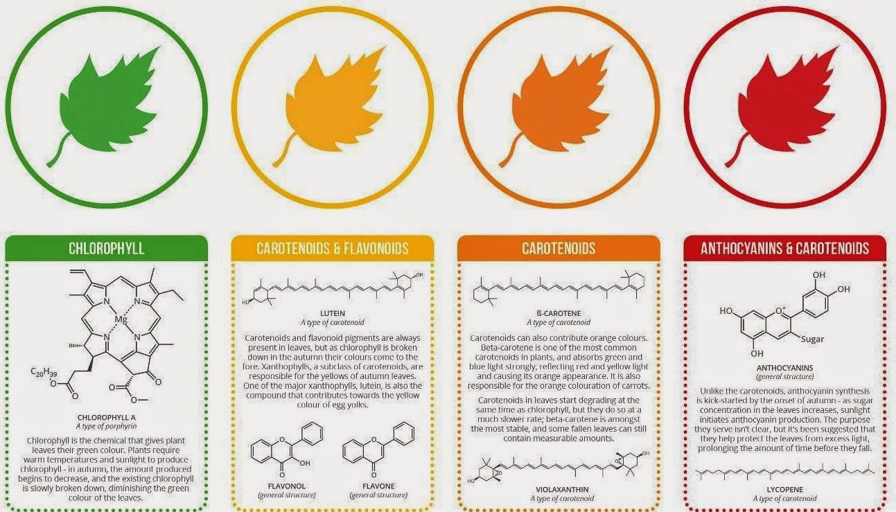 D 39 o viennent toutes les couleurs de l 39 automne scientific park - Les couleurs de l automne ...