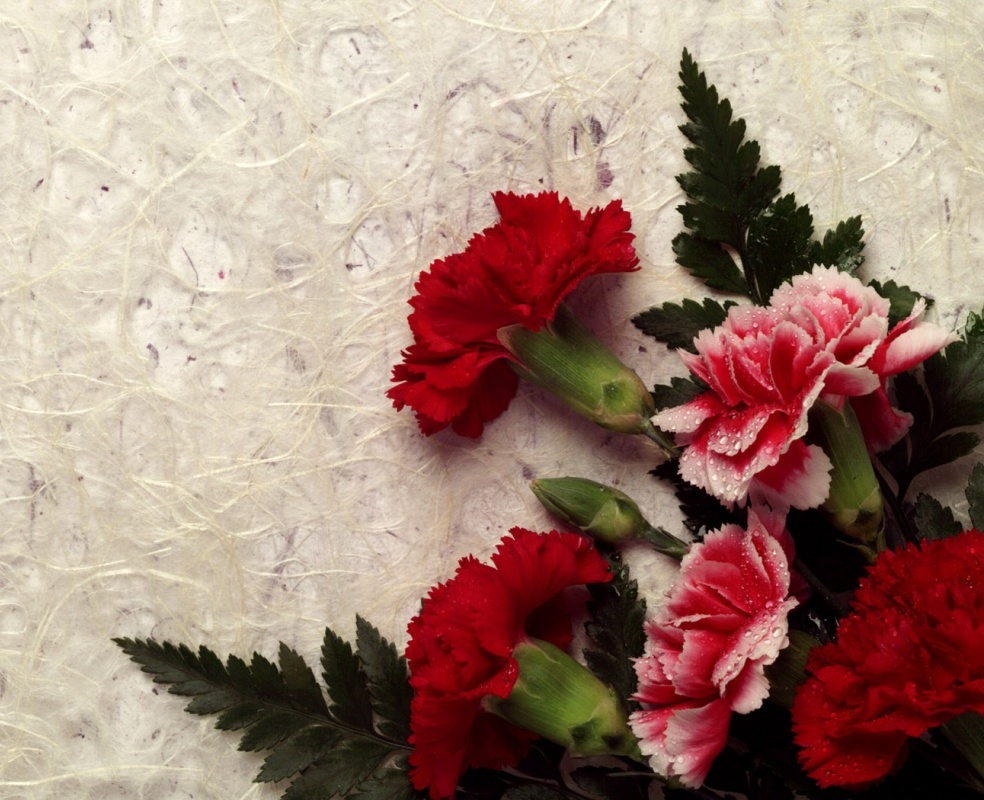 Carnations Flowers: Carnation Flowers Gallery 1