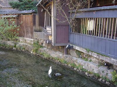 巽橋周辺 白いサギ