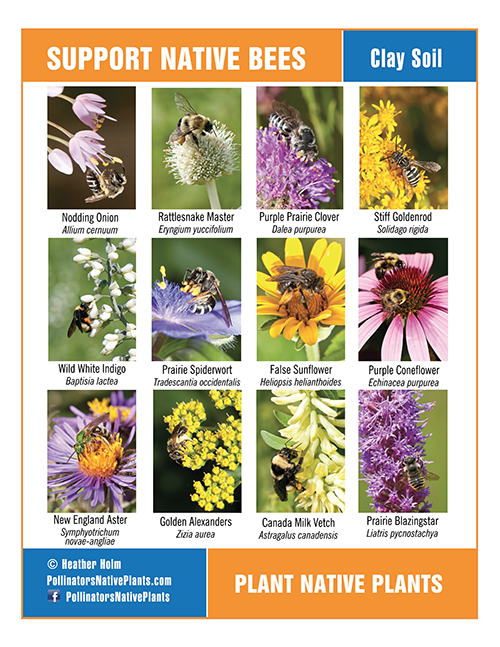 Pollinator Posters - Plant Lists and Native Bees