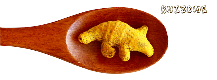 Animal shaped dried turmeric finger
