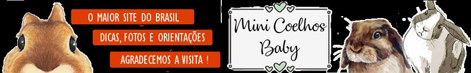 Mini Coelhos Baby