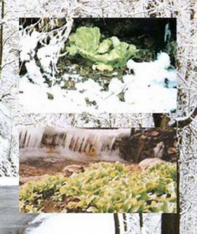 kaskus-forum.blogspot.com - [UNIK] Bumi Ini Sungguh Misterius