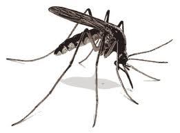 Nyamuk VS Muknya