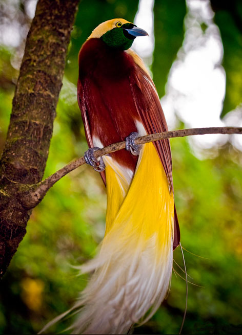 funny world most beautiful birds of the world