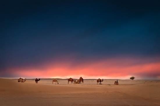waktu-pagi-di-gurun-sahara