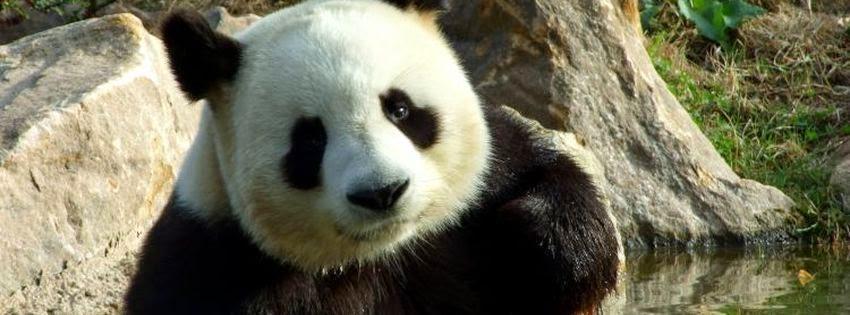 Couverture facebook animal panda
