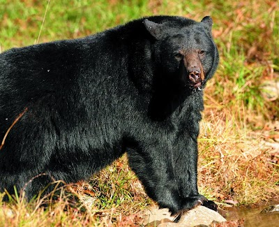 Bears emerging from dens; take steps to avoid nuisance problems