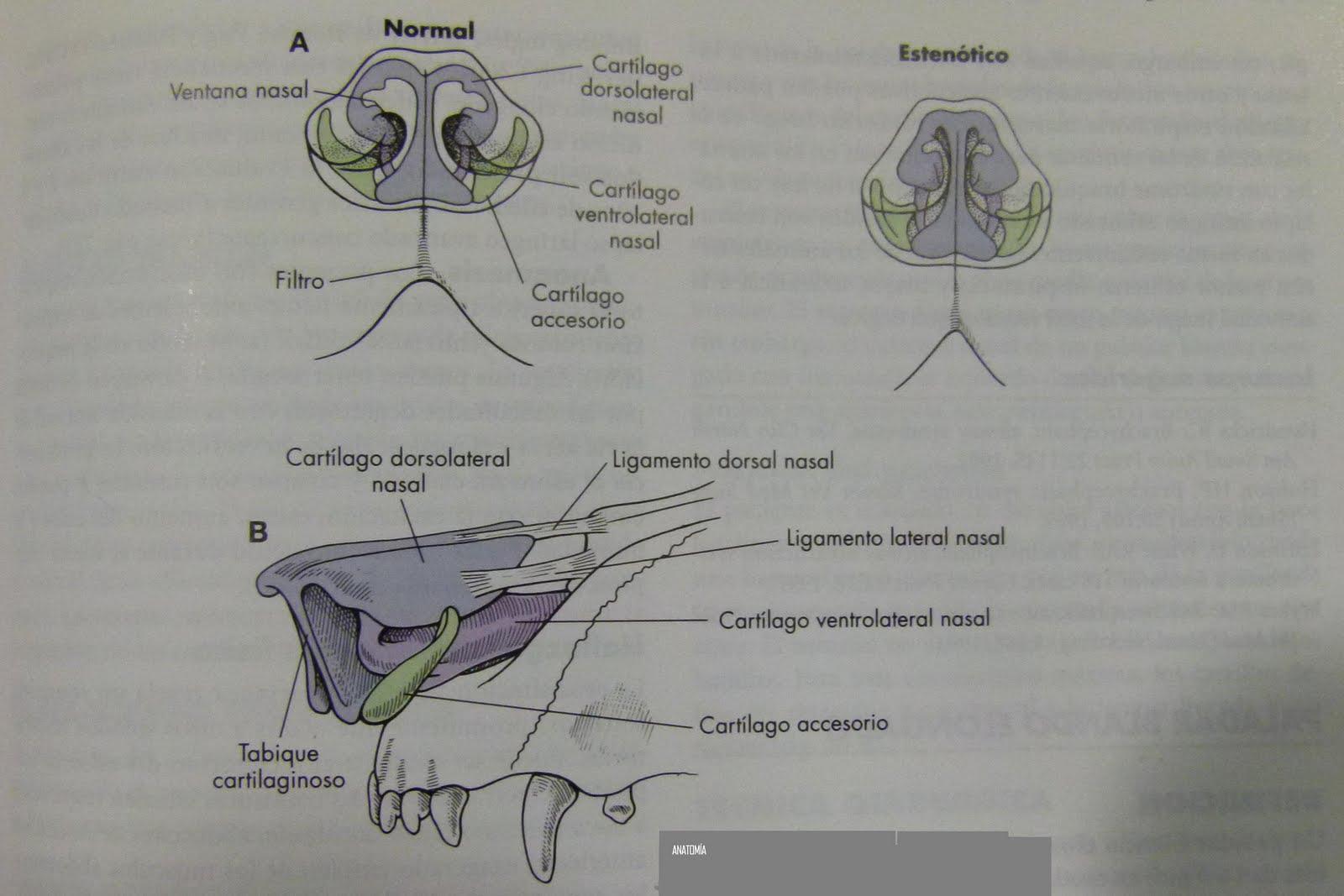 Cirugia Laser Veterinaria Asistencia Quirurgica