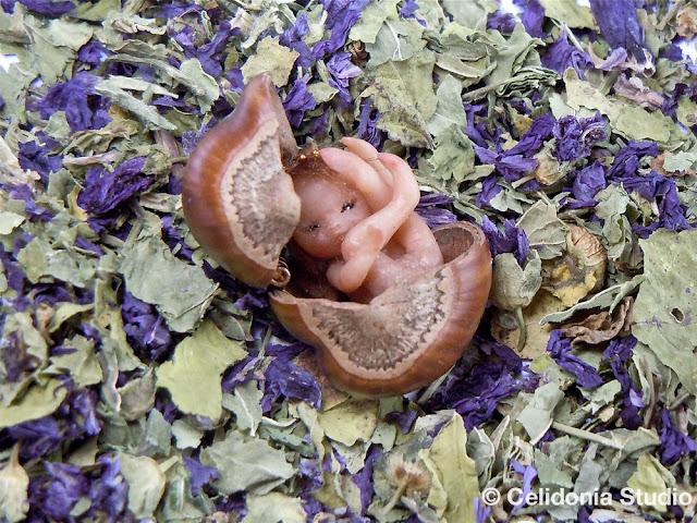 ooak Fata della nocciola modellata in pasta sintetica