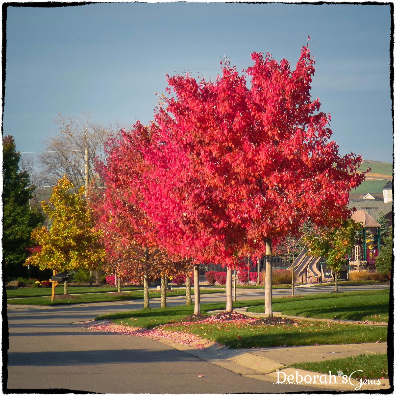 Autumn Glory 2 - photo by Deborah Frings - Deborah's Gems