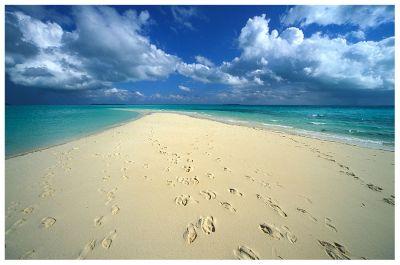 Il mio lato in fiore poiein - Immagini di spongebob e sabbia ...