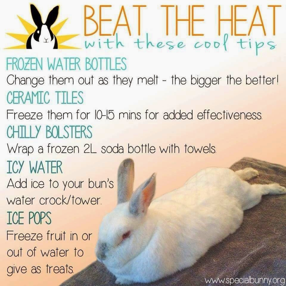 the bunny hut bunny overheating heat exhaustion
