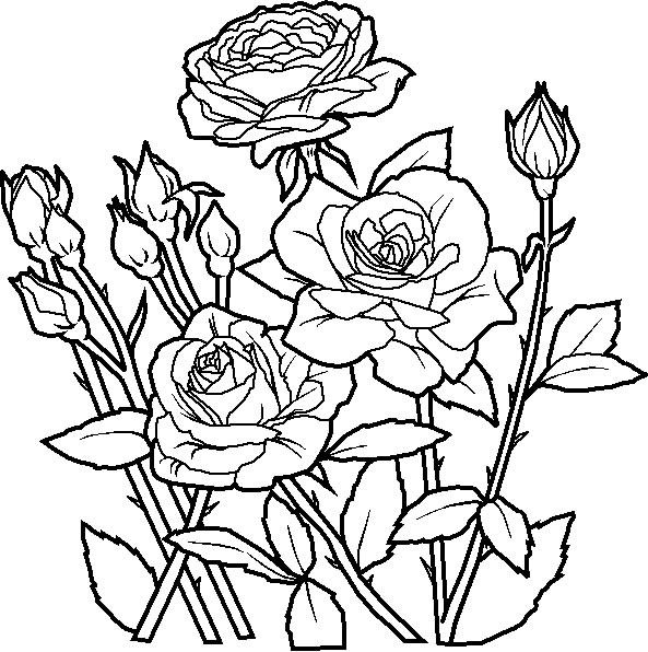 Free Rose Flower Coloring Pages