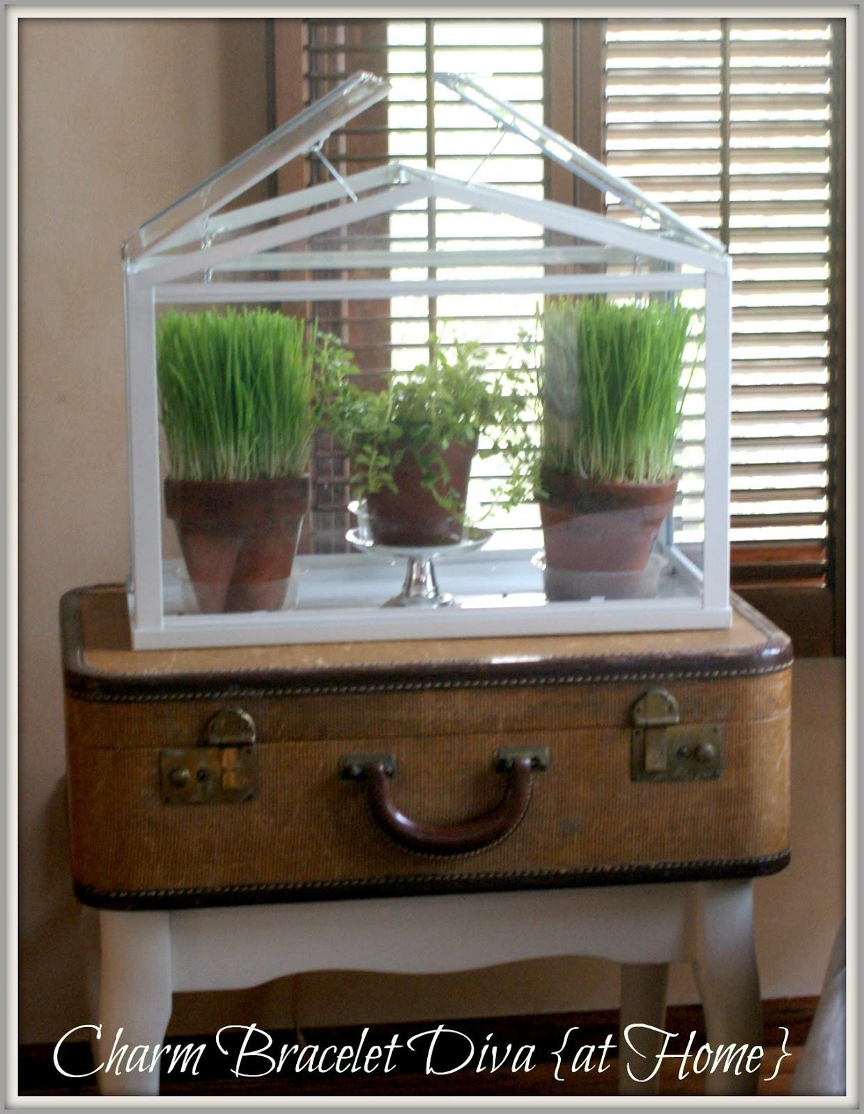 Our hopeful home wheat grass decor 101 ornamental wheat grass in clay pots in ikea terrarium workwithnaturefo