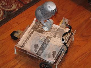 carrinho para papagaio