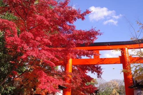 2013年下鴨神社の鳥居周辺の紅葉