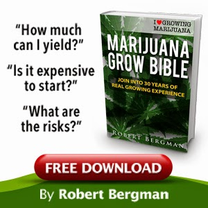 The Marijuana Grow Bible