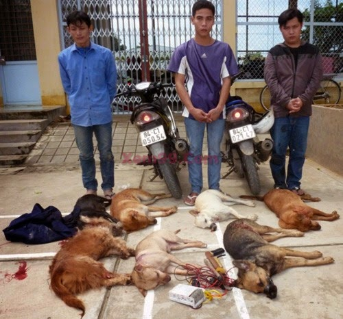 Tin Nóng Phạt hai kẻ trộm chó 3 triệu đồng 2014