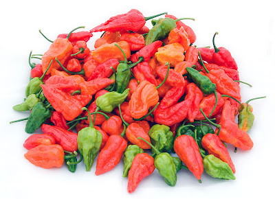 Bhut Jolokia, hottest chilli, Indian spices