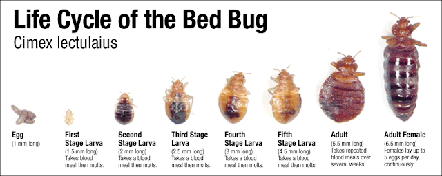 Herbal Pesticides For Bed Bugs