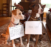 DOG SHAMING: A PUPDATE
