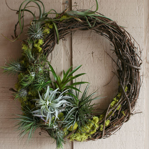 The rainforest garden diy mossy tillandsia wreath - Elegant ways to display air plants in your home ...