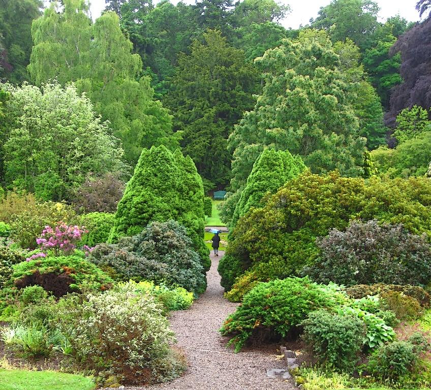 Jardines y hierbas medicinales for Coniferas de jardin