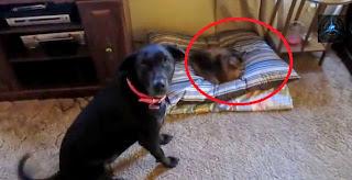 gatos cama perros