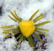 Five Easy Winter Flower Bulbs For Your Gardengreenside Up