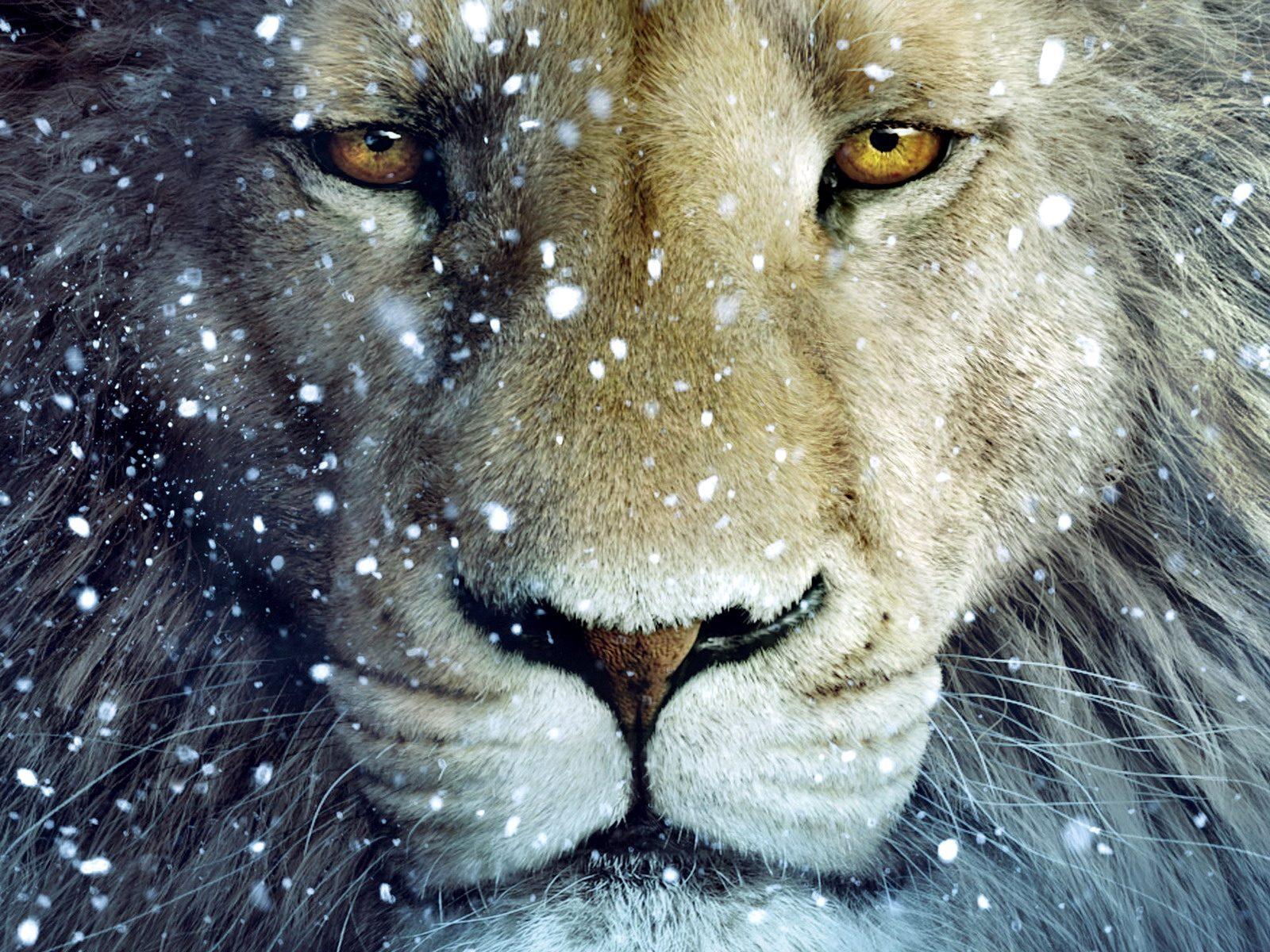 http://2.bp.blogspot.com/-WpVkibjTztE/TptdjbCTniI/AAAAAAAAAl8/QcNzaUIOtpQ/s1600/Lion%2520wallpapers%2520for%2520ipad.jpg